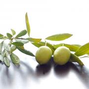 olive-mi